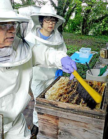 「ニホンミツバチへのアカリンダニの感染被害が深刻化している」と話す坂本名誉教授=左=(亀岡市・京都学園大亀岡キャンパス)