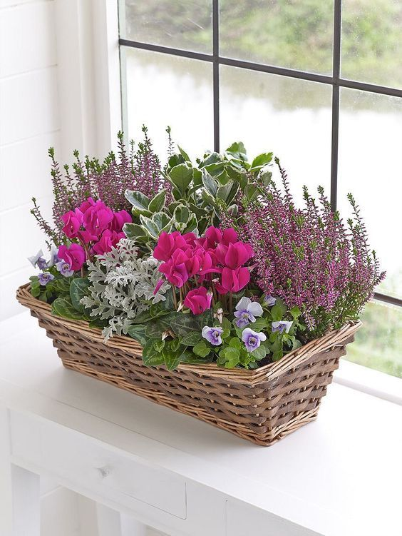 Awesome Plant Combinations For Window Boxes 5 Container Flowers Winter Window Boxes Window Box