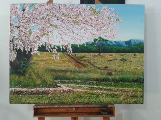 Paineira - árvore frondosa do Brasil