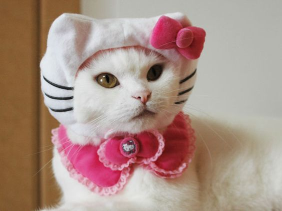 Moda Para Gatos.