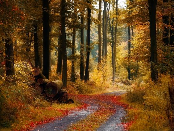 Дорога через осенний лес, размер: 1600x1200 пикселей