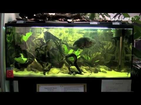 ... aquariam ideas tank ideas and more aqua oscars aquarium chang e 3