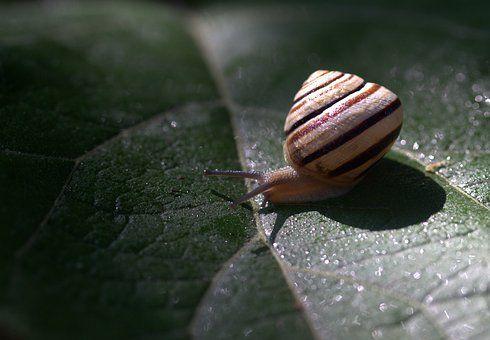 Snail Leaf Wet Shell Light Nature Snail Snails In Garden Snail Image