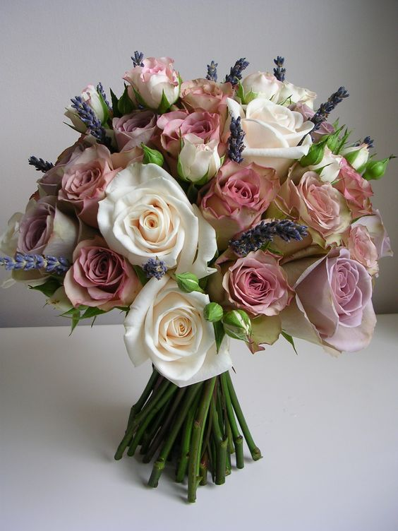 Amnesia Lilacs And Dutch On Pinterest