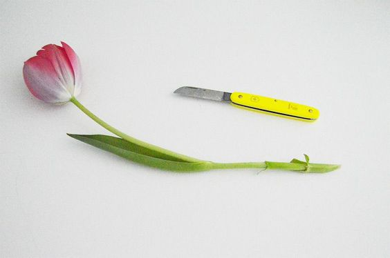 Learn how to extend the life of cut flowers and keep your home looking beautiful!