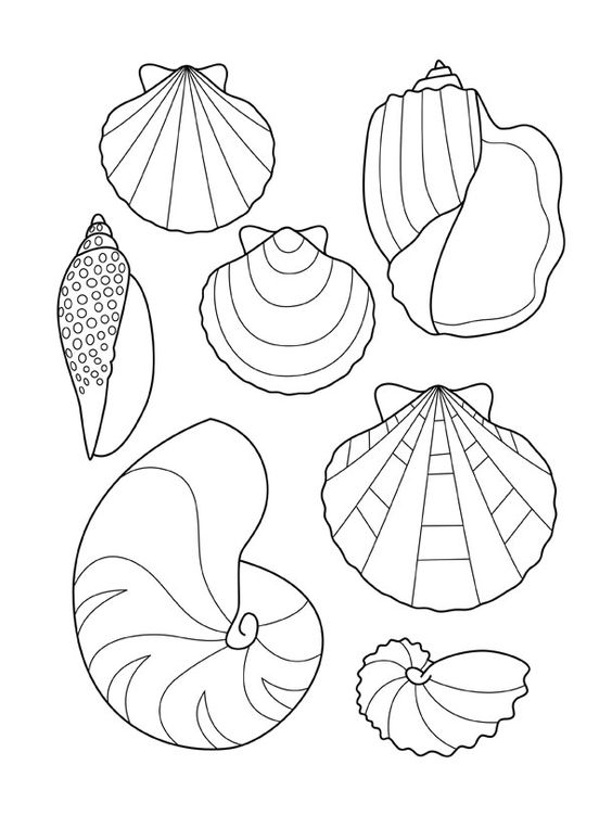 Coloriage coquillages coloriage pinterest - Coloriage de coquillage ...