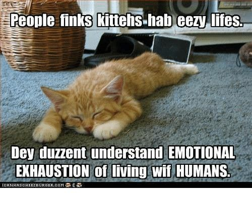 So Tired With Images Funny Cats Cute Little Animals Funny