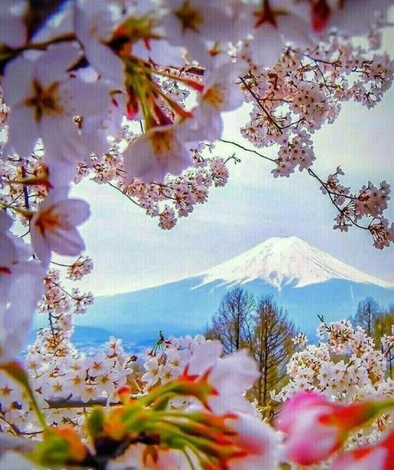 Inspiration Primavera Muitas Flores Fotografia Da
