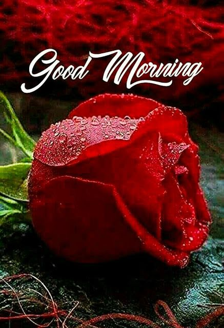 Good Morning Images For Whatsapp Good Morning Roses Good Morning Flowers Good Morning Flowers Gif Good night images hd wallpaper