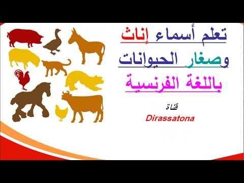 تعلم أسماء إناث وصغار الحيوانات باللغة الفرنسية Education