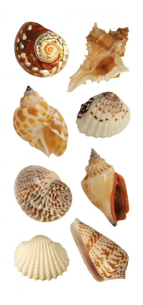 "Shells 2"" Sticker"