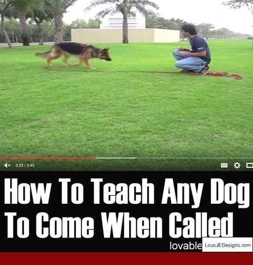 How To Train Your Dog Not To Bark When You Leave The House And