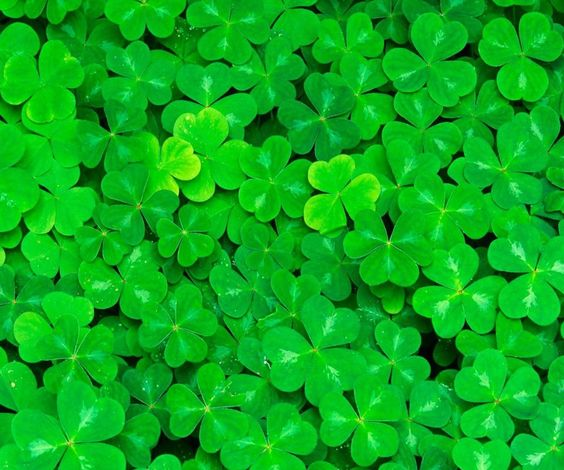 St Patrick Wallpaper: Perfect St. Patrick Day Cell Phone Wallpaper From Zedge
