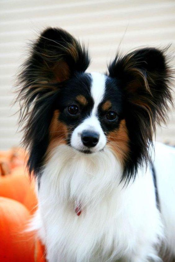 Top 5 Cutest Dog Breeds Top Dog Breeds