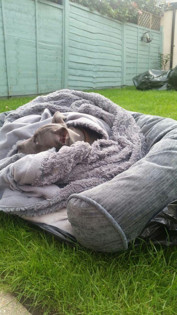 Puppy snugs