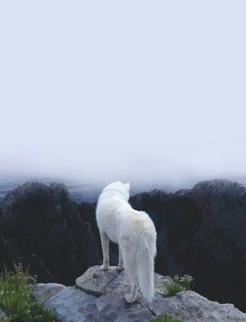 山麓を臨むおしゃれでかっこいい犬の壁紙