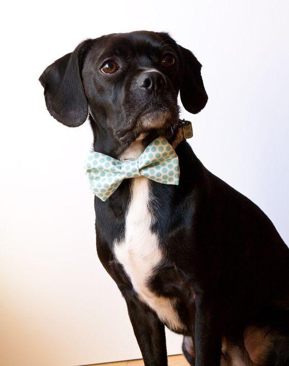 Every fancy gentleman needs a bowtie.