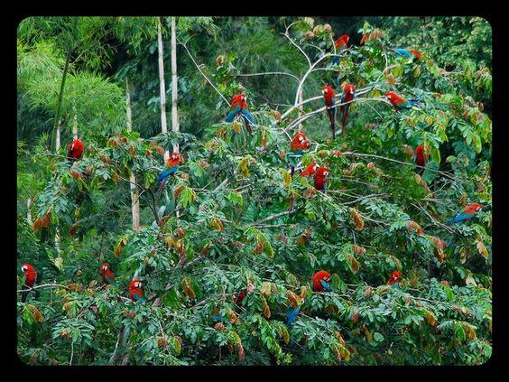 Amazing Amazonia: Amazon Rainforest [46 Pics - 2011 10 19] ➤ http://www.lovethesepics.com/2011/10/amazing-amazonia-amazon-rainforest-46-pics - lovethesepics - 2012 10 02