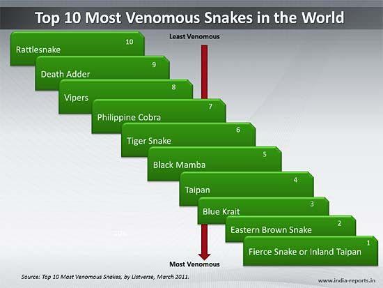World Top 10 Deadliest Snakes | ... Categories > PPT Slide ...