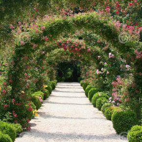 Extraordinari Rose Garden Landscape Ideas