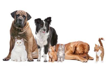 felicidades a todos a los animales y los profesionales que los curan. Hoy es San Francisco de Asís...