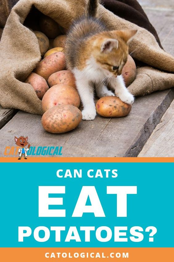 Can Cats Eat Potatoes Or Are They Bad For Them Find Out Whether Your Kitten Should Be Eating Cats As Part Of A B Can Cats Eat Potatoes Cat Care Cat Nutrition