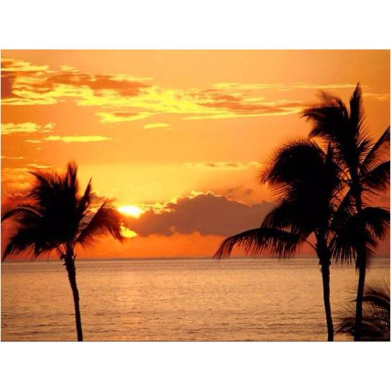Beautiful Puerto Rico: Dream Vacation, Favorite Places Spaces, Daily Quote, Beautiful Places, Places I D, Beautiful Sunset, Palm Trees, Tropical Sunset