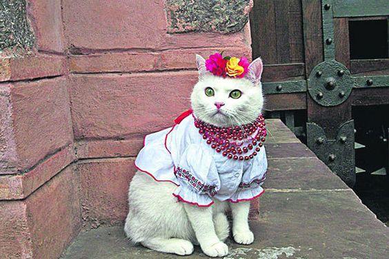 http://i.obozrevatel.ua/16/1599465/gallery/700193.jpg