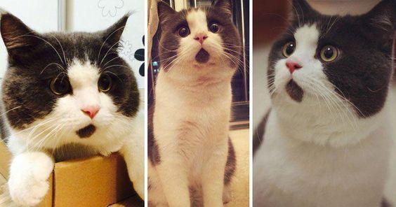 """Gatos con cara de """"Sorpresa""""!!!!!!!!!!!!!!!"""