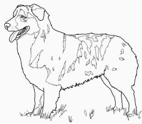 Australian Shepherd Puppy Coloring Pages German Shepherd Colors
