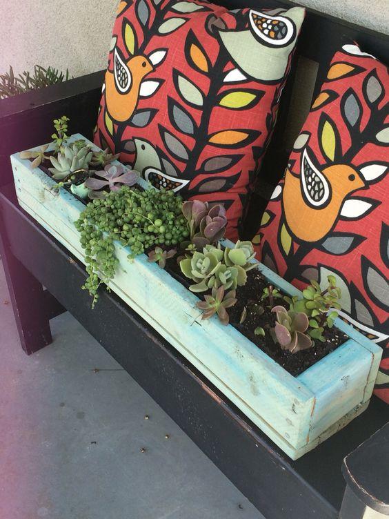 A mix of succulents, so cute!