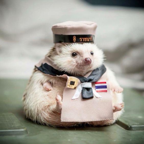 Kanoon navy:
