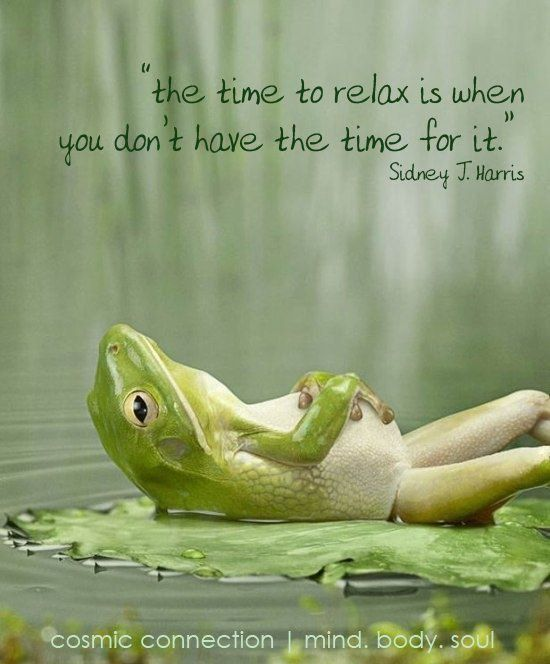 Cute Frog Quotes: The Time To Relax Is When You Don't Have The Time For It
