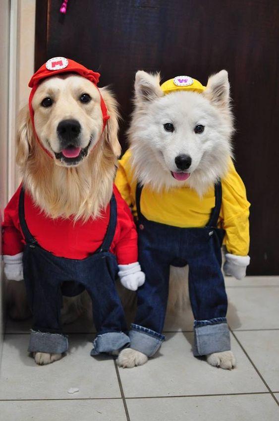 Cool Dog Duo Names