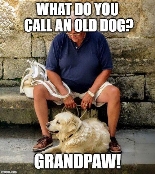 Old Dog Puns Dog Puns Bad Pun Dog Funny Animal Jokes