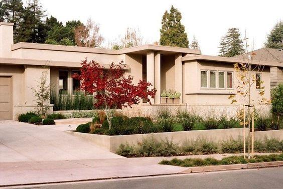 Modernes Haus Vorgarten Roter Japanischer Ahornbaum Bambus Equisetum
