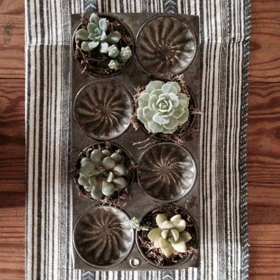 Old muffin tin + succulents! randee