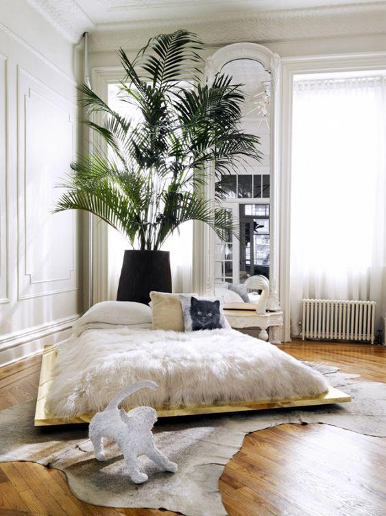 Anordnung und Regal zwischen Fenstern..und pflanze