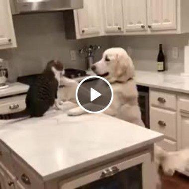 Cãozinho está na maior amizade com o gato.