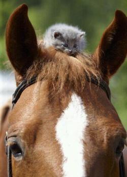 Kitty on Horse!