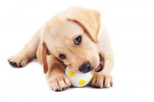 Do you know how to choose the right toy for your pet?