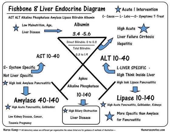 lft diagram  fishbone lab skeleton | just b.cause #8