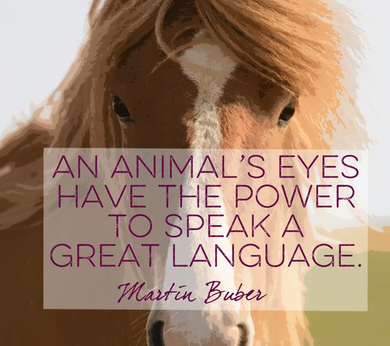 Words by Martin Buber - Quotes That Will Melt Every Animal Lover's Heart - Photos