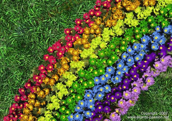 Rainbow-colored flowers on the ground
