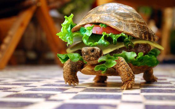 Turtle wallpaper - ein Burger laufen auf dem Boden essen