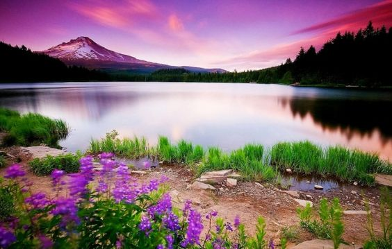 full_hd_nature_wallpapers_free_downloads_for_laptop_22 wallpapers