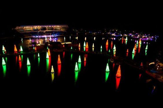 The Sea of Trees at SeaWorld Orlando's Christmas Celebration dazzles the night and enhances holiday spirit.
