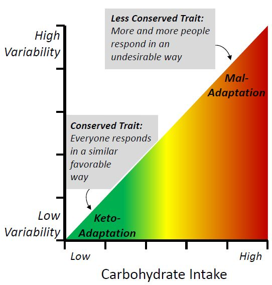 discussion of carbohydrates