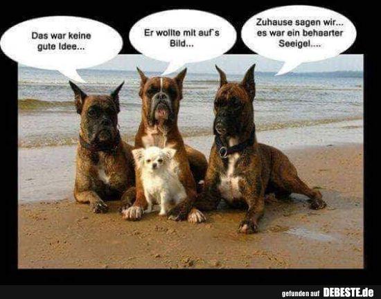 Lustiges Bild Lustiger Tiere Comedy Shop Lustige Hund Bilder Tiere Haustiere