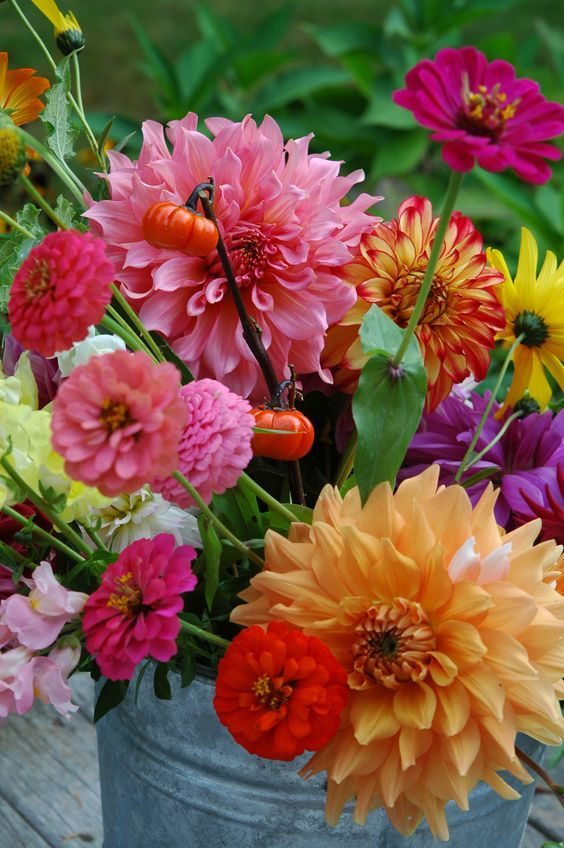 Start small to discover your love for backyard flower farming.